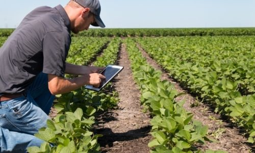 Digital Agriculture: A System Theoretic Viewpoint