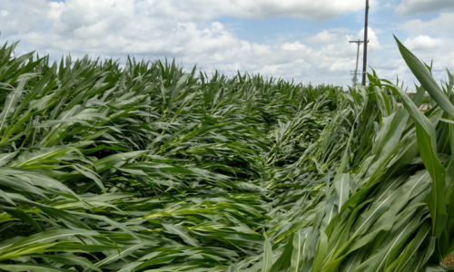 Weathering the Storms: Crop Damage and AgMRI