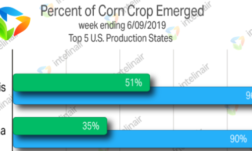 "Slowest Corn Emergence Pace On Record Could Lead To Misinterpretations Of ""Crop Conditions"""