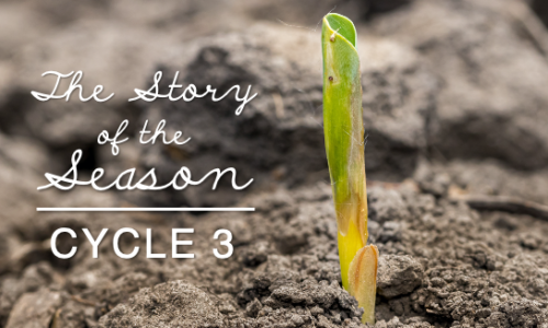 Early Emergence and Replant