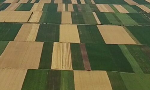 Advancements in Precision Agricultural Insights
