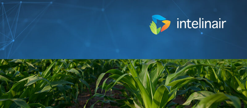 Case Study: Combatting Crop Disease with Crop Intelligence